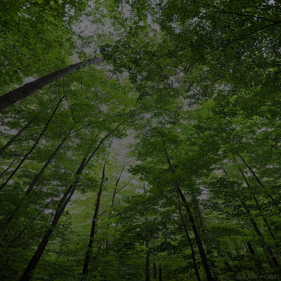 Akmir - Doğayı Koruyoruz